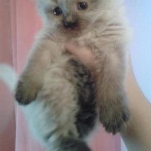 Отдам даром красивых котят
